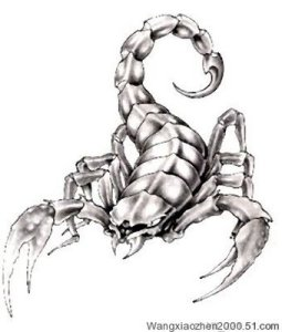 Scorpion tattoo pictures